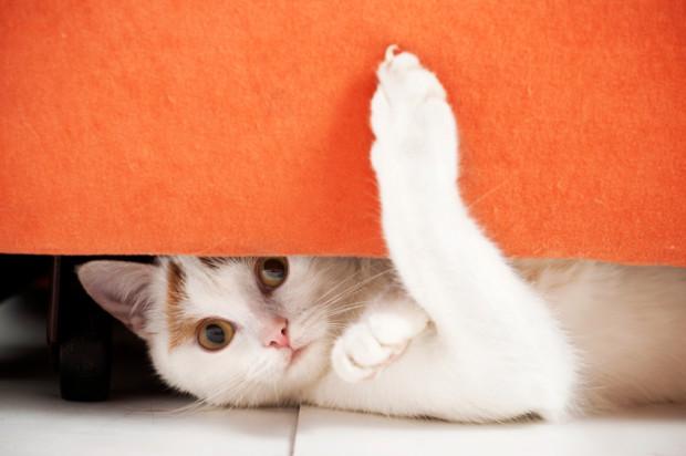 bm-cat-behavior