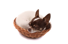 bm-sleeping-dog