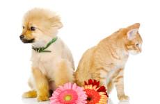 bark-meow-dog-cat-pet-ready