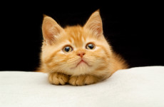 prepare-kitten