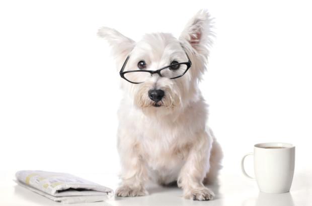 dog-newsletter