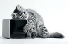 pet-cube-bark-meow