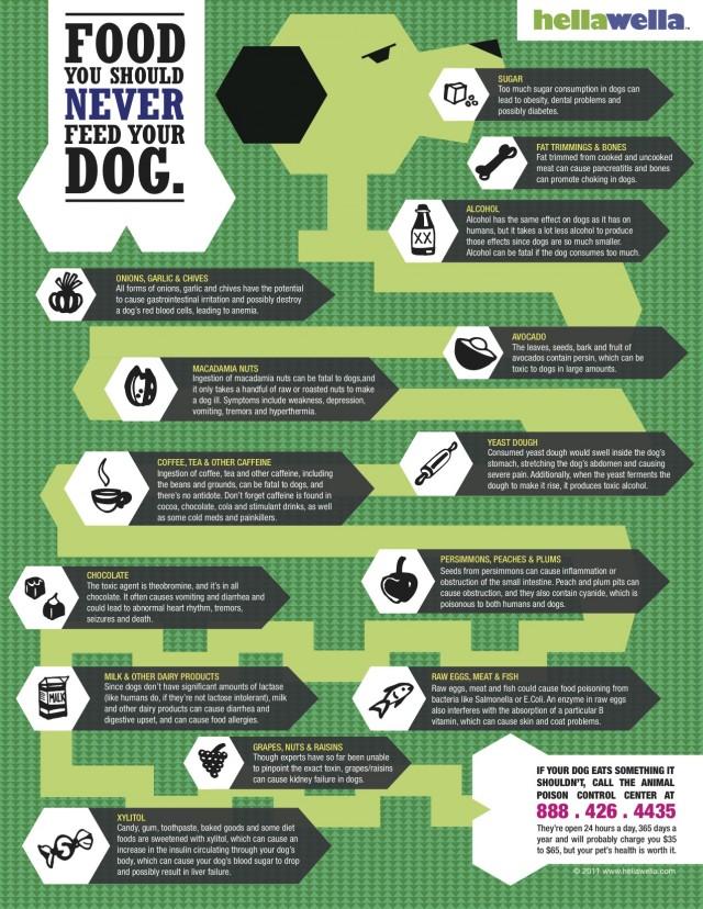 bad-food-dogs