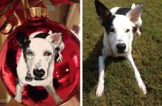 bark-meow-ornament-winner