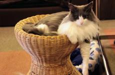cat-cafe-2