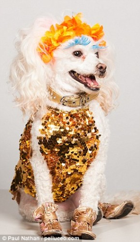 dogs-better-sequins