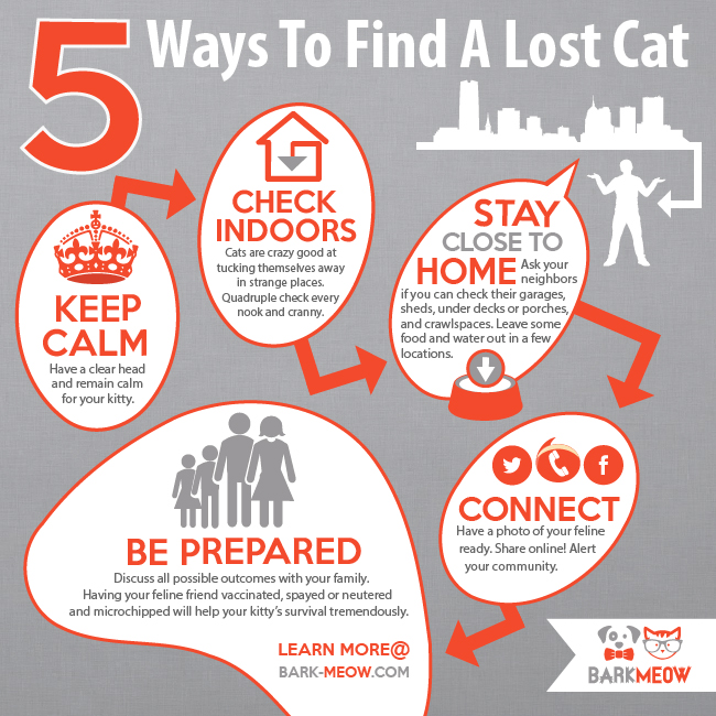 72DPI_BARK-MEOW_Infographic_5_ways_to_find_a_lost_cat_V3_11-7-14-01