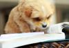 bark-meow-shalvis