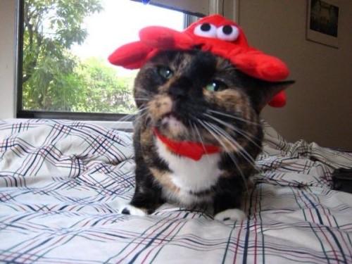 halloween-crabcat