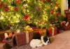 bark-5-decorations