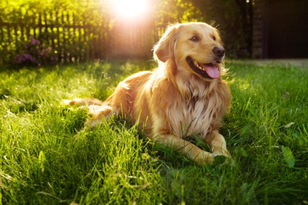 bark-dog-mysteries