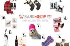 Bark-Gift-Guide-dog