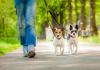 bark-meow-walkzee