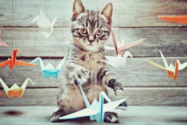 cat-breed-puzzle-main