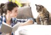 bark-meow-cat-lady