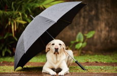 bark-meow-storm-ready