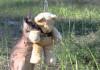 bark-kangaroo-main
