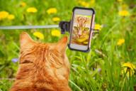 bark-meow-cat-photo