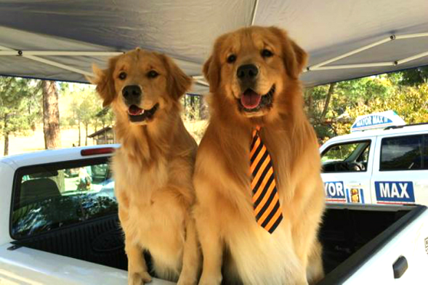 5 Things To Know About The California Dog Mayors