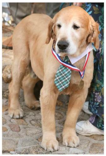 max the dog mayor