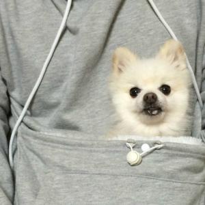 The Sweatshirt Every Pet Owner Needs image