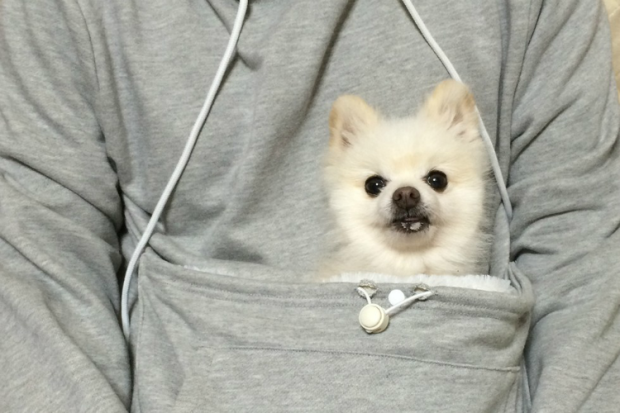 The Sweatshirt Every Pet Owner Needs image