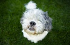 bark-wagging