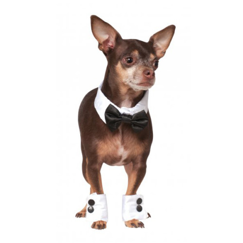 debonair-dog-bow-tie-cuff-set-1