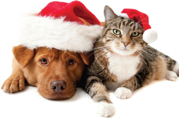 holiday pet costumes