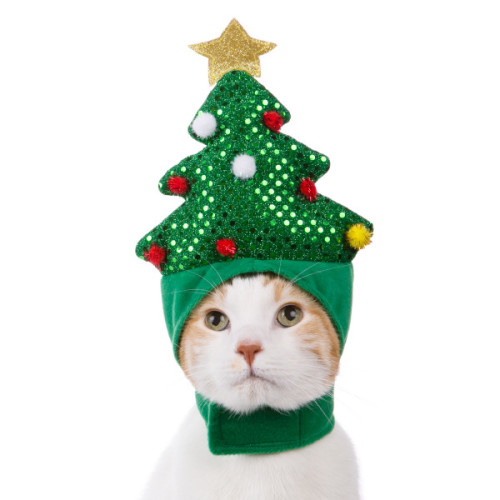 cat hat  sc 1 st  Bark Meow & The 10 Absolute Best Holiday Costumes For Pets | Bark Meow